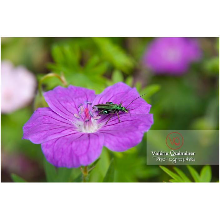 Insectes autres