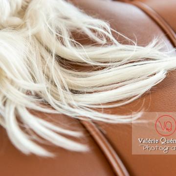 Détail de poils blancs d'un Coton Tulear sur un canapé marron - Réf : VQA1-11-0382 (Q3)