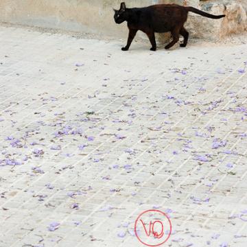 Chat noir dans la rue - Réf : VQA1-24-0014 (Q1)