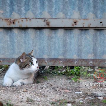 Chat tigré se glissant sous un portail - Réf : VQA1-24-0021 (Q1)