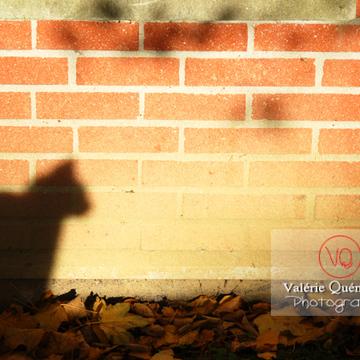 Ombre de profil d'un chat sur un mur en brique à l'automne - Réf : VQA1-24-0039 (Q1)