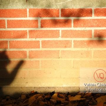 Ombre de profil d'un chat sur un mur en brique à l'automne - Réf : VQA1-24-0040 (Q1)