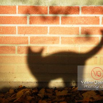 Ombre de profil d'un chat sur un mur en brique en automne - Réf : VQA1-24-0041 (Q1)