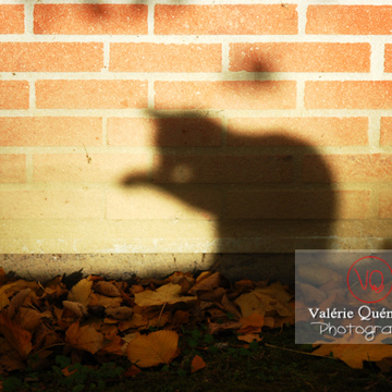 Ombre de profil d'un chat se toilettant sur un mur de brique en automne - Réf : VQA1-24-0042 (Q1)
