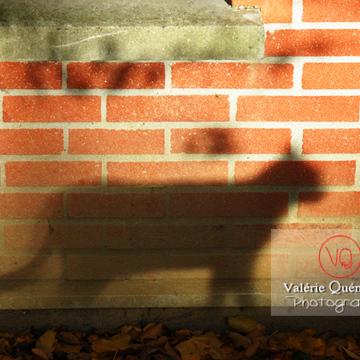 Ombre de profil d'un chat sur un mur en brique à l'automne - Réf : VQA1-24-0043 (Q1)