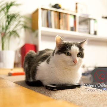 Chat bicolore noir & blanc allongé sur un téléphone - Réf : VQA1-24-0387 (Q3)
