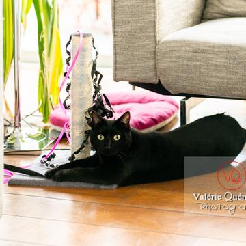 Chat noir jouant en intérieur - Réf : VQA1-24-0645 (Q3)
