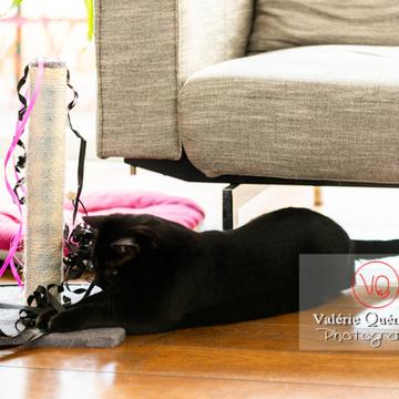 Chat noir jouant en intérieur - Réf : VQA1-24-0646 (Q3)