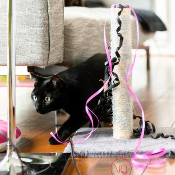 Chat noir en intérieur - Réf : VQA1-24-0651 (Q3)