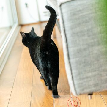 Chat noir regardant par la fenêtre - Réf : VQA1-24-0660 (Q3)