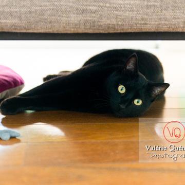 Chat noir allongé sous un canapé - Réf : VQA1-24-0676 (Q3)