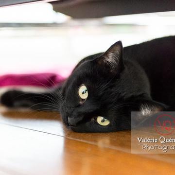 Regard d'un chat noir allongé sous un canapé - Réf : VQA1-24-0682 (Q3)