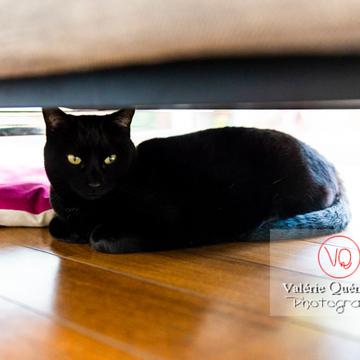 Chat noir allongé sous un canapé - Réf : VQA1-24-0685 (Q3)