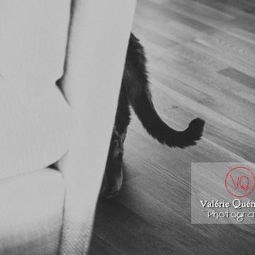 Queue d'un chat domestique bleu (gris) derrière le canapé - Réf : VQA1-24-0877-2 (Q3)