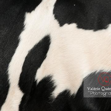 Détail robe vache de race Prim'Holstein - Réf : VQA1-45-0016 (Q2)