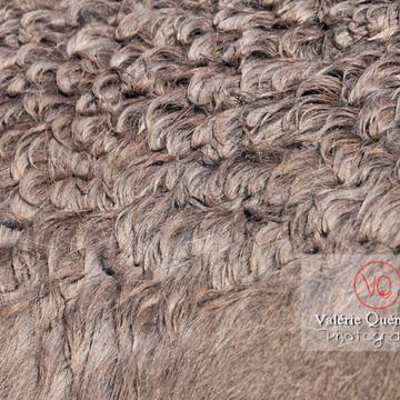 Détail pelage d'un âne gris en hiver - Réf : VQA1-55-0048 (Q2)