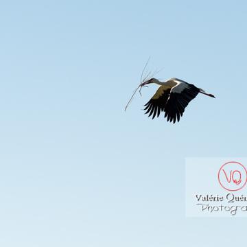 Cigogne transportant une brindille - réf : VQA27-0029 (Q3 rec)