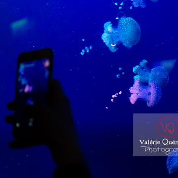 Méduses / Aquarium de Monaco - Réf : VQA9-0030 (Q3)
