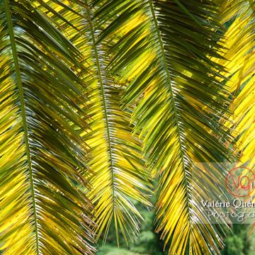 Feuilles de palmier - Réf : VQF&J-0508 (Q1)
