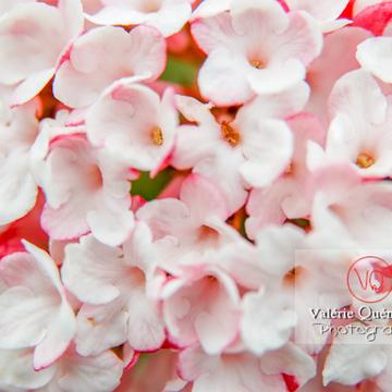 Détail de fleur rose - Réf : VQF&J-0989 (Q1)