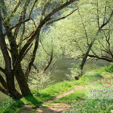 Arbres au bord de la rivière - Réf : VQF&J-1040 (Q1)