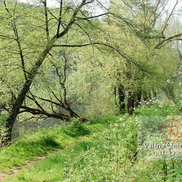 Arbres au bord d'une rivière - Réf : VQF&J-1041 (Q1)