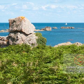 Fougères et granit rose sur l'île de Bréhat / Côtes d'Armor / Bretagne - Réf : VQFR22-0416 (Q2)