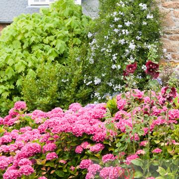 Massif de fleurs sur l'île de Bréhat / Côtes d'Armor / Bretagne - Réf : VQFR22-1005