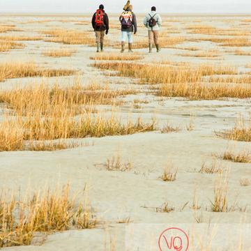 Balade à marée basse dans la baie du Mont-St-Michel / Normandie - Réf : VQFR50-0014 (Q1)