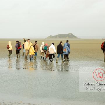 Balade dans la baie du Mont-St-Michel à marée basse - Réf : VQFR50-0018 (Q1)