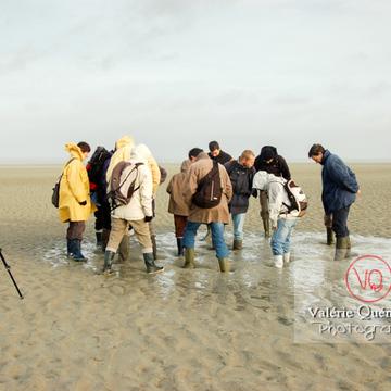 Test de sables mouvants dans la baie du Mont-St-Michel à marée basse - Réf : VQFR50-0021 (Q1)
