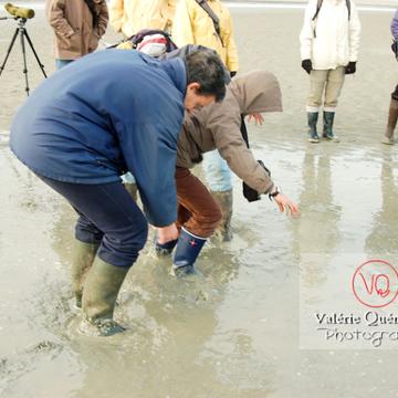 Test de sables mouvants dans la baie du Mont-St-Michel / Normandie - Réf : VQFR50-0023 (Q1)