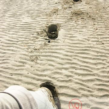 Balade à marée basse dans la baie du Mont-St-Michel / Normandie - Réf : VQFR50-0037 (Q1)