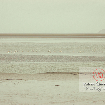 Baie du Mont-St-Michel / Normandie - Réf : VQFR50-0038-TV (Q1)