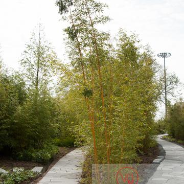 Jardin des géants, Lille - Réf : VQFR59-0029