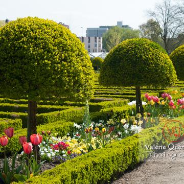 Jardin de plantes, Amiens - Réf : VQFR80-0008