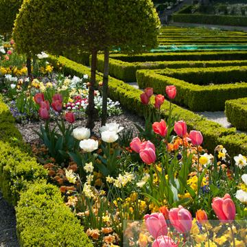 Jardin de plantes, Amiens - Réf : VQFR80-0009