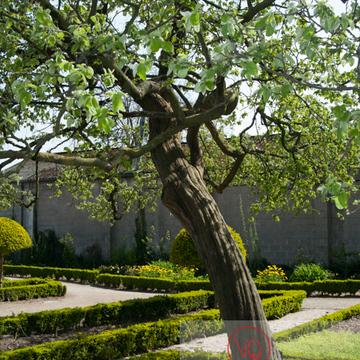 Jardin des plantes, Amiens - Réf : VQFR80-0015