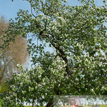 Jardin des plantes, Amiens - Réf : VQFR80-0020