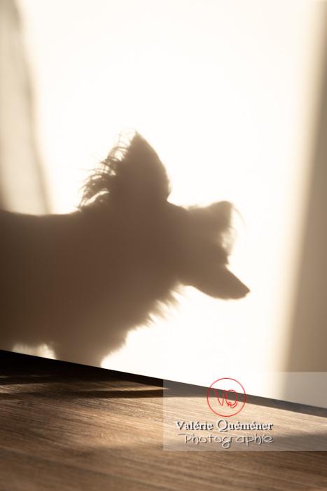 Ombre d'un Petit Chien Russe - Réf : VQA1-11-0082 (Q3)