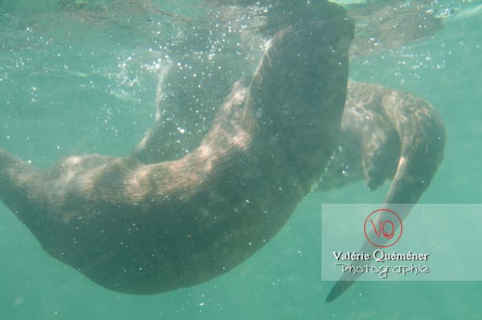 Loutre d'Europe / Zoo de Montpellier - Réf : VQA1-14-0013 (Q2)