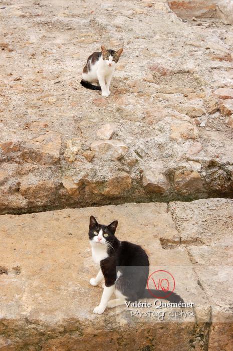 Chats sauvages - Réf : VQA1-24-0015 (Q1)