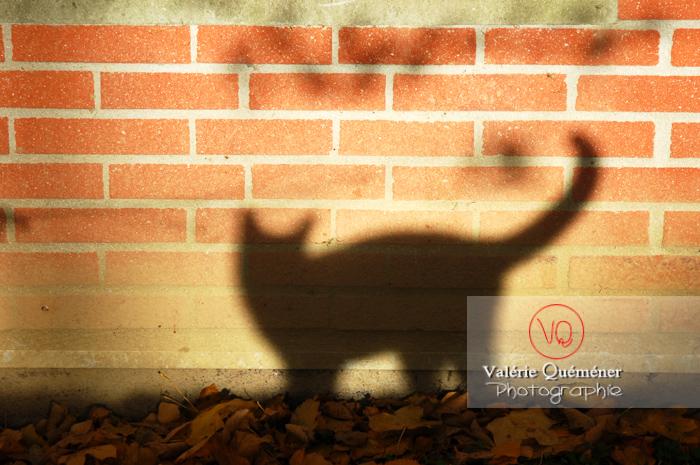 Ombre de profil de chat sur un mur de brique en automne - Réf : VQA1-24-0041 (Q1)