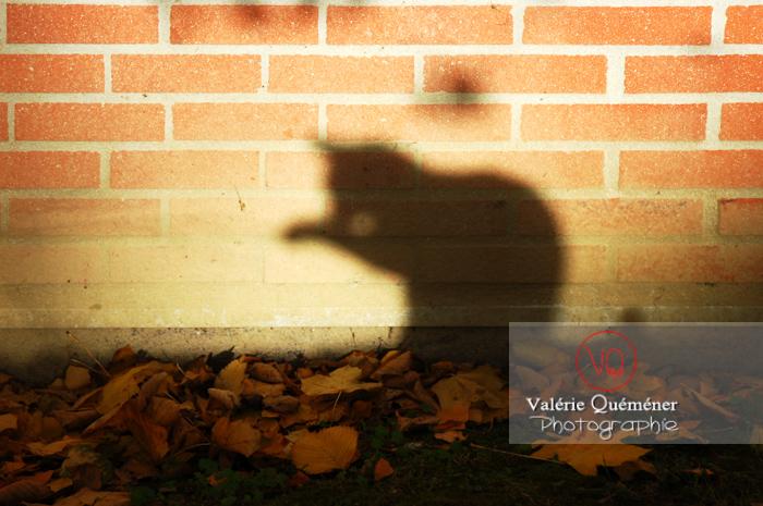 Ombre de profil d'un chat sur un mur en brique à l'automne - Réf : VQA1-24-0042 (Q1)