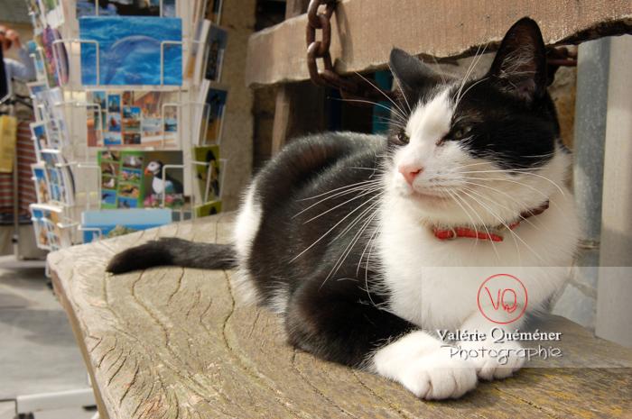 Chat domestique bicolore noir et blanc allongé sur un banc - Réf : VQA1-24-0058 (Q1)