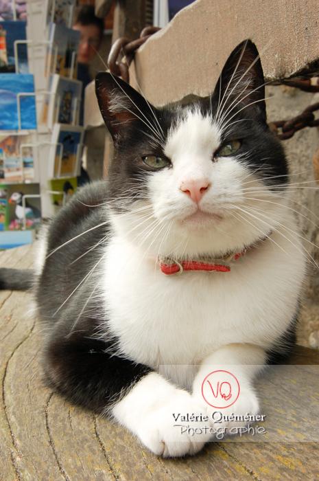 Portrait de chat domestique bicolore noir et blanc allongé sur un banc - Réf : VQA1-24-0060 (Q1)