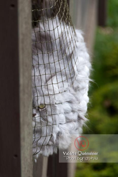 Chat domestique bleu (gris) dans l'ombre d'un feuillage - Réf : VQA1-24-0854 (Q2)