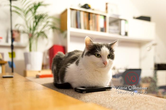Chat bicolore noir et blanc allongé sur un téléphone - Réf : VQA1-24-0387 (Q3)
