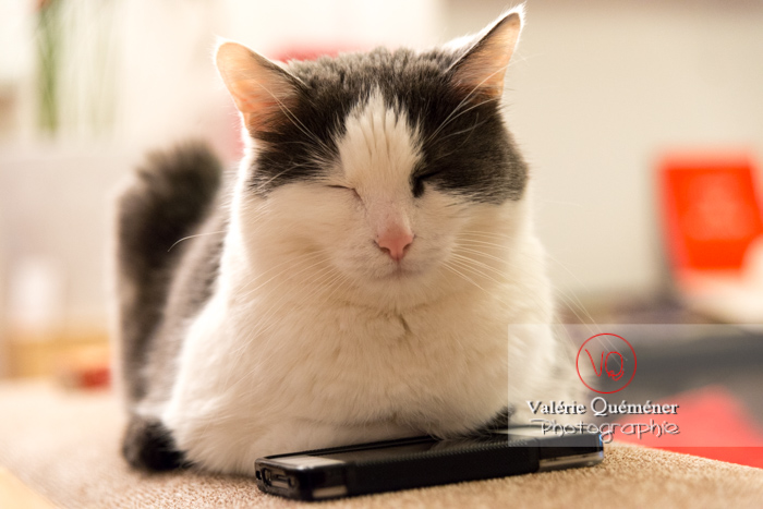 Portrait d'un chat bicolore noir et blanc allongé sur un téléphone - Réf : VQA1-24-0389 (Q3)