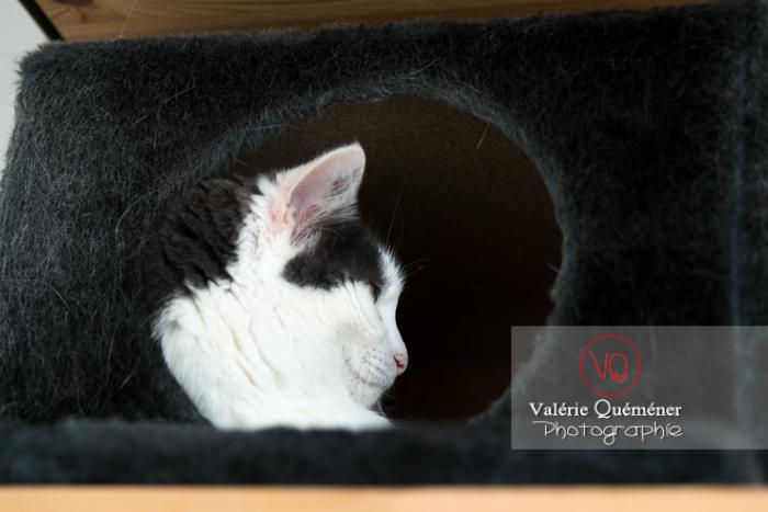Portrait d'un chat bicolore noir et blanc dans sa niche - Réf : VQA1-24-0391 (Q3)